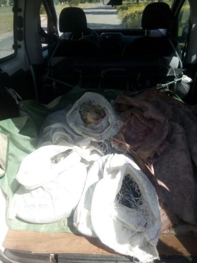 Рибпатрульні Полтавщини викрили порушника, який незаконно перевозив понад 63 кг сома