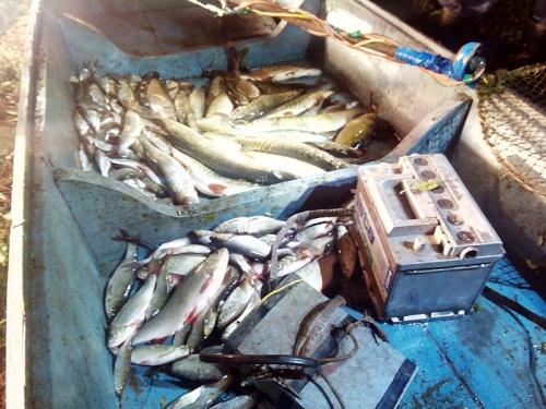 Принцип дії та вплив електричних пристроїв на водні біоресурси, - іхтіологи Полтавського рибоохоронного патруля